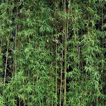 武漢園林綠化用苗草花基地金邊麥冬工程庭院小區別墅時令花卉草花