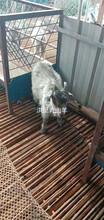 黑龍江青山羊養殖場圖片
