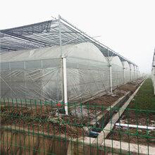 咸阳市温室大棚配件养殖大棚安装在线咨询图片