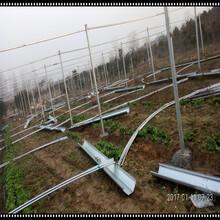 安装设计日光连栋大棚玻璃温室大棚潮州厂家供应蔬菜大棚图片