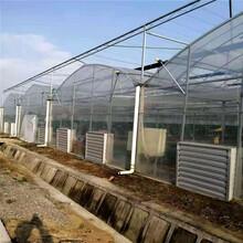 伊犁廠家批發蔬菜大棚溫室養殖大棚溫室連棟大棚鍍鋅管圖片