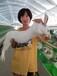 廣西比利時種兔比利時兔籠養好還是散養好廣西