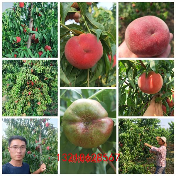 怎样种植桃树苗,大连樱桃树苗基地