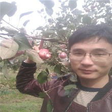 维纳斯苹果苗苹果树苗新品种烟富8图片
