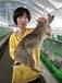 甘肅新西蘭兔體型大生長速度快的是什么品種