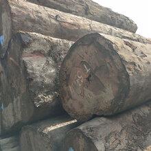 吉林第伦桃木供应商图片