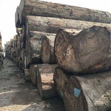 广西第伦桃木价格图片