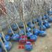 3公分山楂树苗、3公分山楂树树苗新品种、3公分山楂树苗价格多少