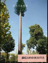 仿生塔定制20米仿生樹鐵塔制造仿生避雷塔圖片