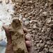 供應麗水慶元縣砂石場淤泥處理設備定制帶式泥漿脫水機價格