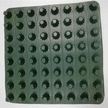 塑料排水板凹凸型排蓄水层塑料滤水疏水层高度8-60mm图片