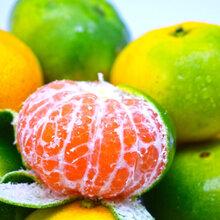 特早蜜橘果大皮薄颜色好果肉细腻无渣口感好图片