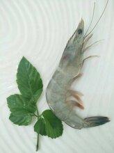 厂家大量供应南美白对虾支持一件代发图片