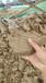 淮北頂管施工泥漿處理設備免費咨詢