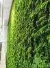 仿真绿植墙、仿真防晒绿植墙、仿真室内绿植墙