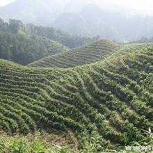 貴州山茶油價錢圖片