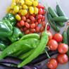 苏州有机蔬菜配送