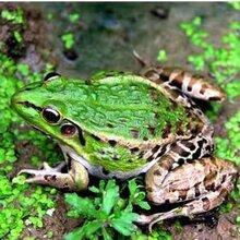 枝江匯澤生態農業開發蛙稻菌立體養殖