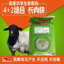 怎样养羊长得快-这些养羊技术要点需知晓