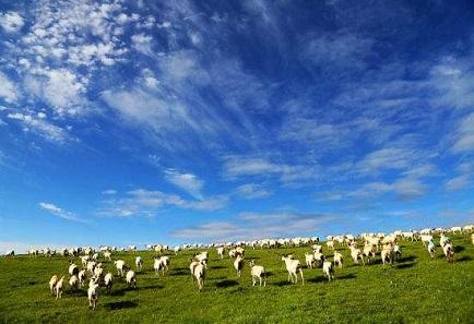 喂羊的饲料-羊如何快速催肥