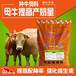 繁殖母牛的饲养-养牛饲料