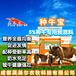 母牛專用飼料-母牛飼料價格,種牛飼料