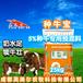 提高繁殖母牛生产力-英美尔牛预混料,种牛饲料
