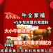 牛饲料母牛预混料品质优良