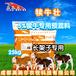 英美爾犢牛飼料,犢牛預混料-提供技術服務