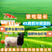 英美爾育肥羊飼料,育肥羊飼料羊飼料批發育肥專用