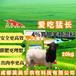 英美爾育肥羊飼料,喂羊的飼料自制羊飼料廠家直供