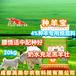 母羊專用飼料母羊預混料技術服務,種羊飼料