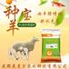怀孕母羊饲料母羊预混料厂家直销,种羊饲料