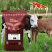 牛飼料配方育肥牛飼料牛飼料廠家,肉牛飼料