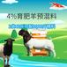 英美爾育肥專用預混料,圈養羊飼料育肥羊飼料獸醫服務
