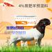 自配羊飼料圈養羊飼料獸醫服務,育肥專用預混料