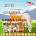英美尔种公羊饲料,怀孕母羊饲料母羊饲料配比产羔壮