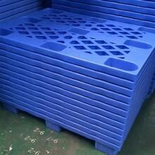 南城专业制造塑胶卡板厂家生产厂家图片