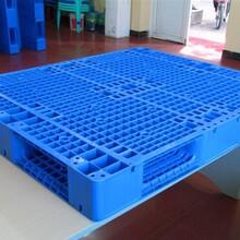 东城专业生产塑胶卡板加工报价塑胶托盘图片