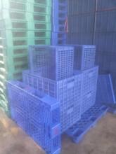 深圳专业制造塑胶卡板厂家报价塑胶托盘林达森包装图片