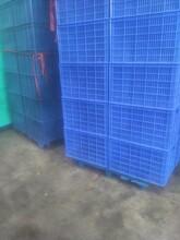 东城专业生产塑胶卡板加工报价塑胶托盘林达森包装图片
