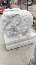 張家口石雕動物雕像安裝圖片