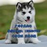 广州南沙区买狗去哪里