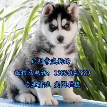 广州买狗攻略?广州买有保障的狗狗