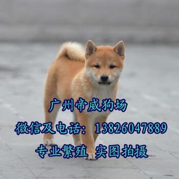 珠海哪里有狗店珠海在哪里有卖柴犬的