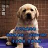 广州哪有大型狗场