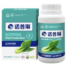 包菜增產的種植用肥方法(諾普琳)