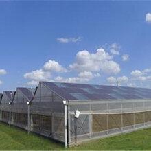 养猪大棚建设-温室大棚造价-玻璃温室大棚