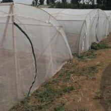 加厚耐用蚂蚱养殖网工厂批发定做好网棚蝗虫养殖专用网图片