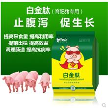 快速养猪如何养殖出栏快猪吃什么三个月出栏法图片